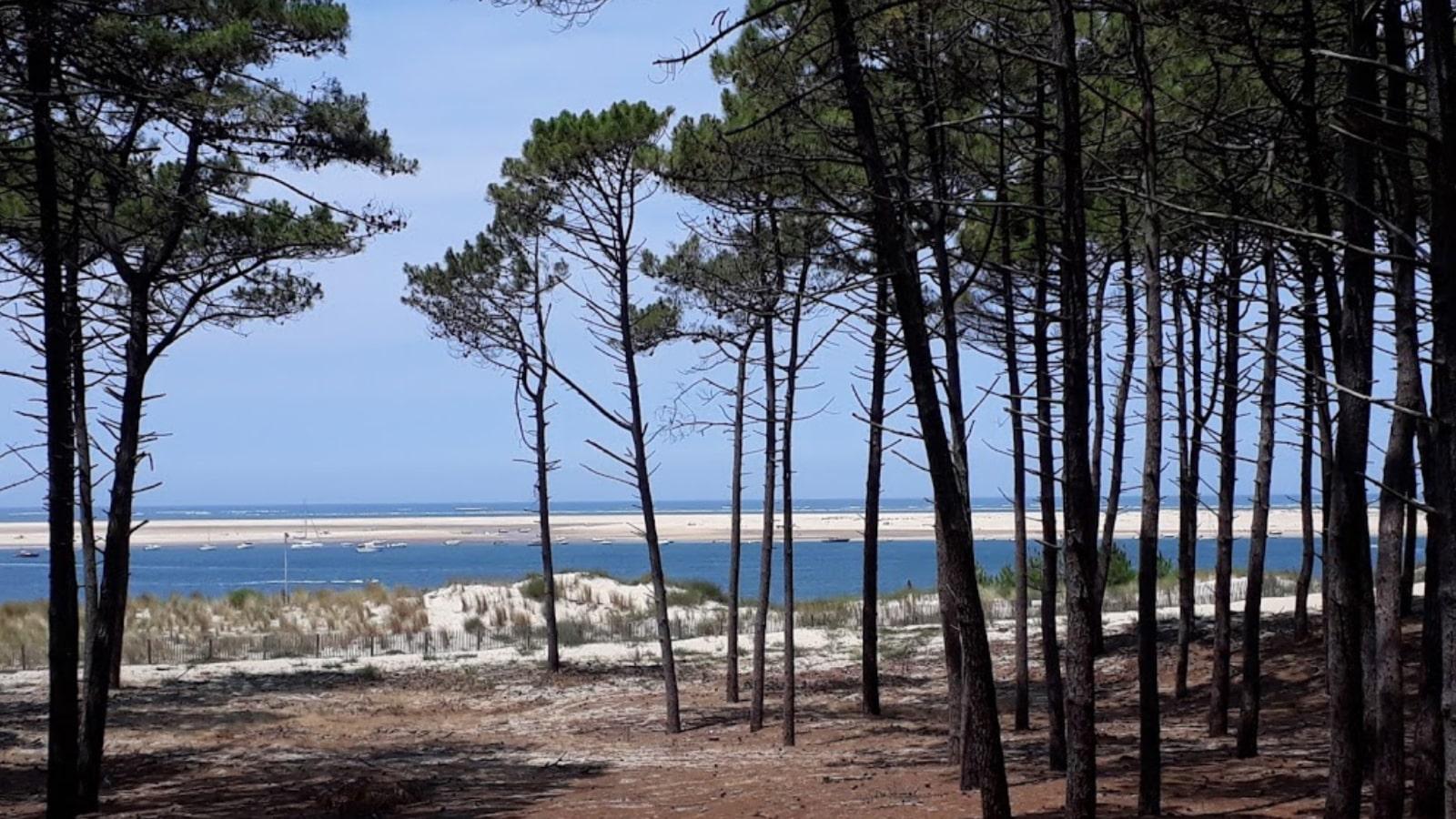 Appel aux dons - Premier projet en faveur de la biodiversité - Plage du Petit Nice 4