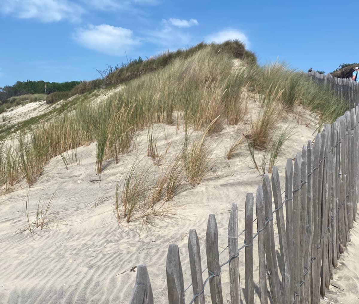 Premier projet en faveur de la Biodiversité sur la plage de la plage du Petit Nice par C Ma Terre